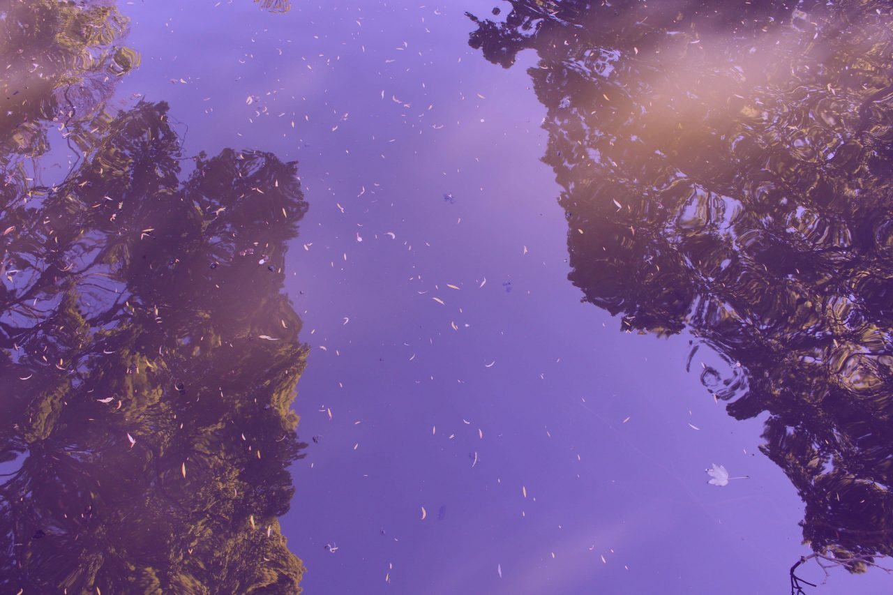 Reflection of trees on the river with purple overlay.